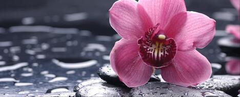 """Laissez la """"fleur rare"""" éclore dans votre vie"""