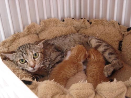 MASCARA et ses 3 bébés