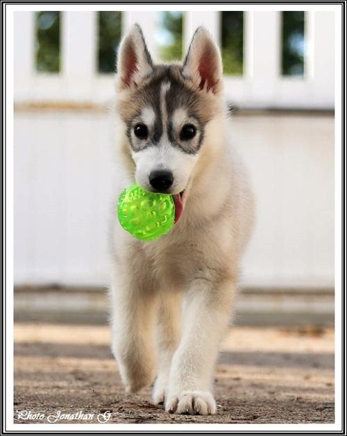 Jaïko (2 mois)