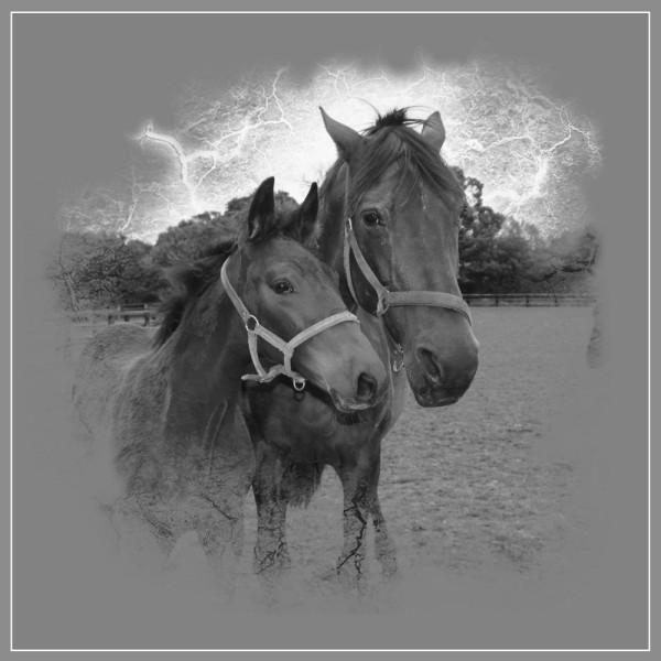chevaux 03