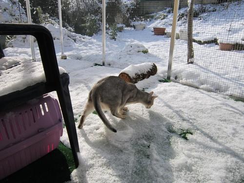 L'enclos sous la neige !!!!!