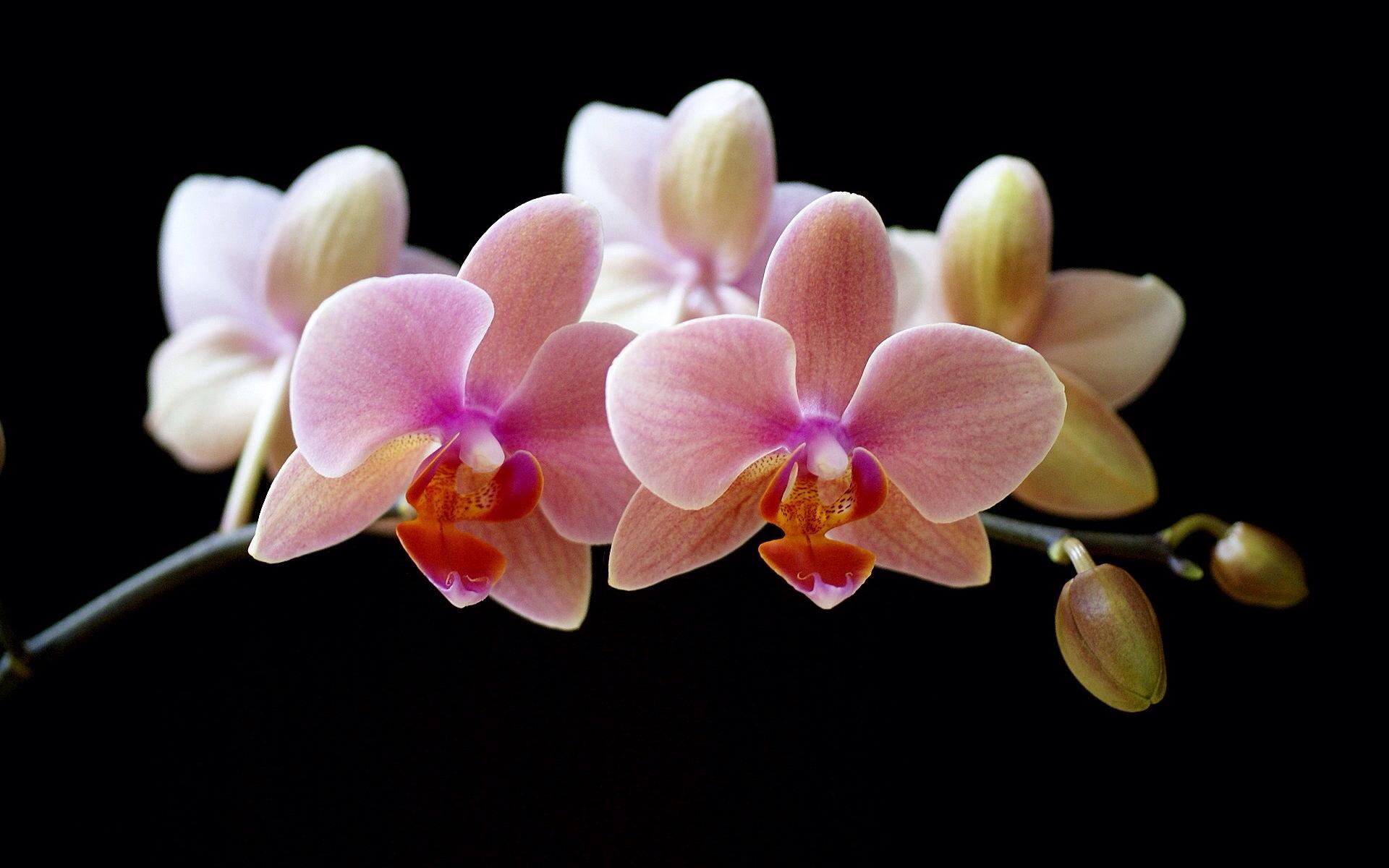 orchidée fleur qui tombe - l'atelier des fleurs