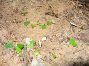 Termites et fourmis
