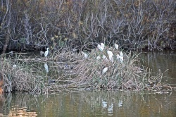 Oiseaux de la lagune...