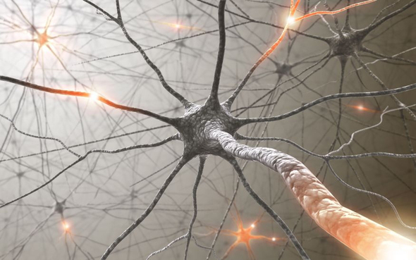 Neurone connections