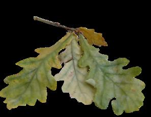 Pluie de feuilles