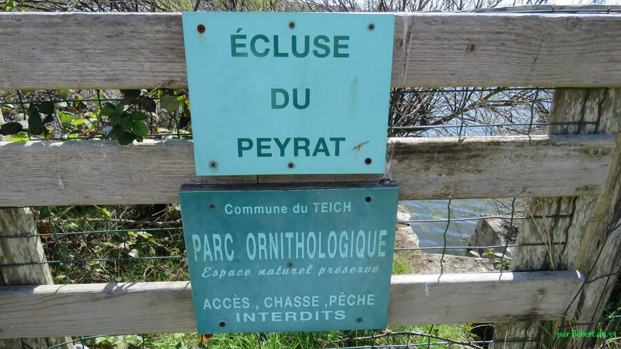 le parc ornithologique du Tech (33)