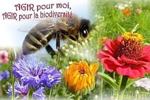 carte-abeille-biodiversite- 600