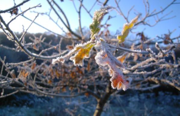 matin de glace.2