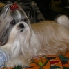 Dog Shox de Brussels 0171.JPG
