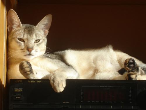 Musique et soleil !!!