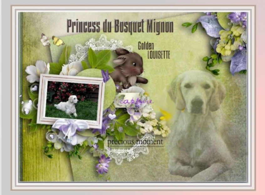 Psp,scrap; easter,pasqua, spring, lente, golden retriever, louisette, pasen,pâques, printemps