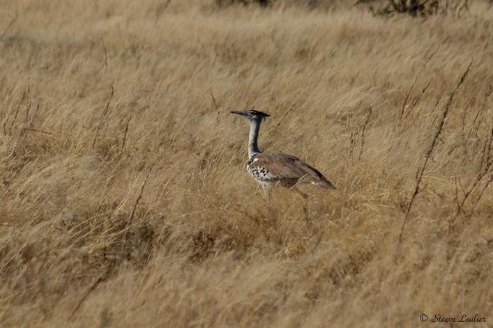 Parc national d'Etosha