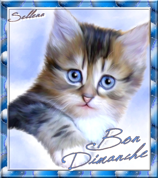 **Chatons mignons**Animations