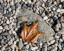 Feuille d'automne :
