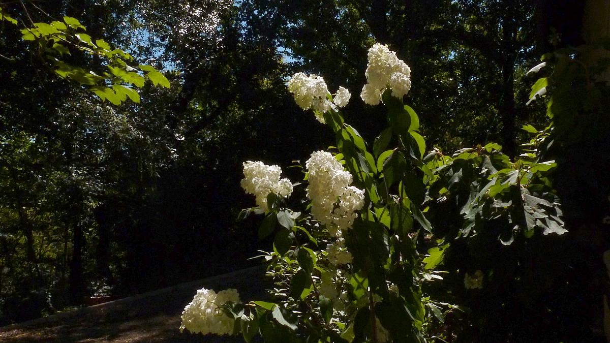 Au jardin de Marithé semaine 33/2013