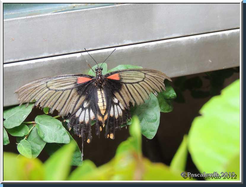 Le Paradis des Papillons à Sanguinet - 2/9