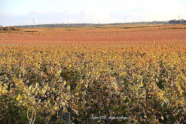 vignes-champigny 8708