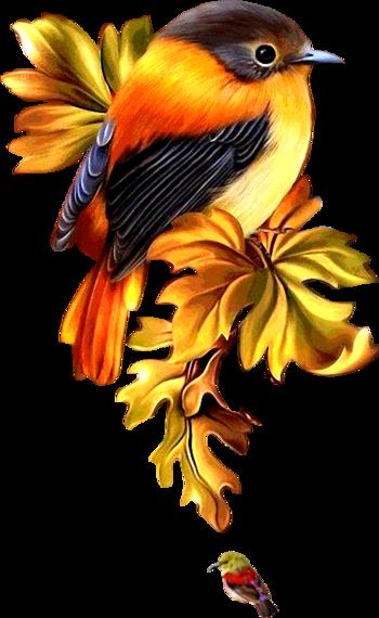 Oiseaux Page 3