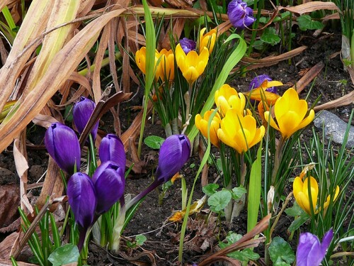 Le printemps en approche...