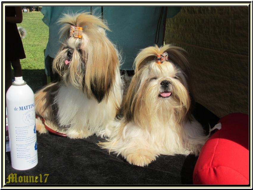 Exposition canince à Aytré(La Rochelle) dimanche 21 juin 2015