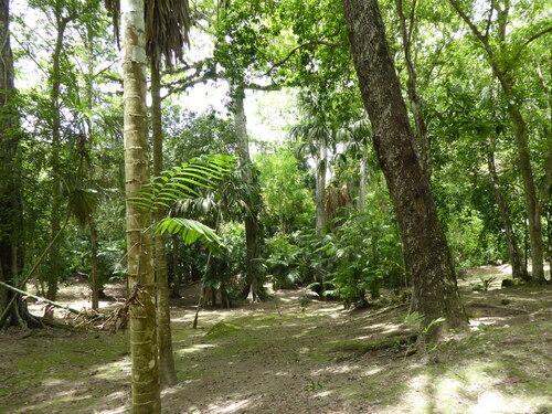 Guatemala, 12ème jour (4) Flores Tikal