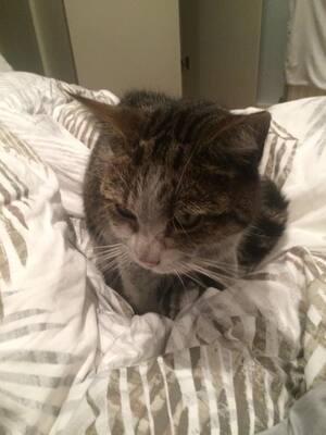 Un chat bloqué 3 jours dans le métro londonien
