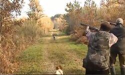 La chasse en Sologne : du petit au grand gibier, du rêve à la réalité