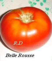 Belle Rousse