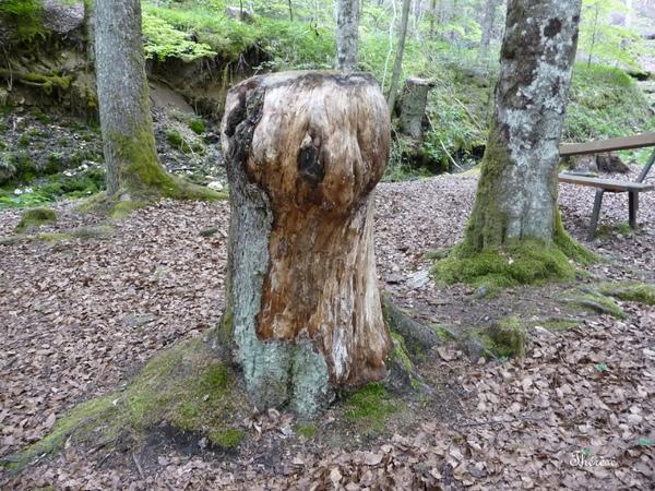 Promenade dans le Jura - La source bleue