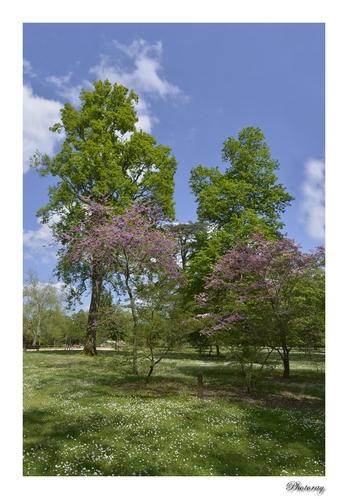 Le parc Jean Rameau