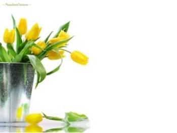 tulipes marjolaine créations