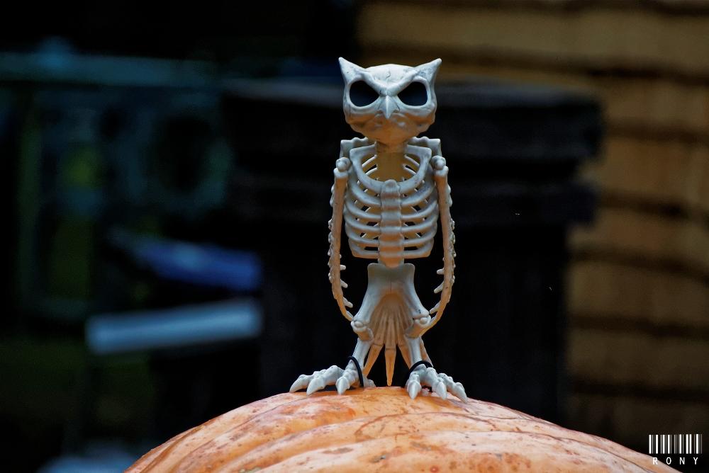 En route vers Halloween