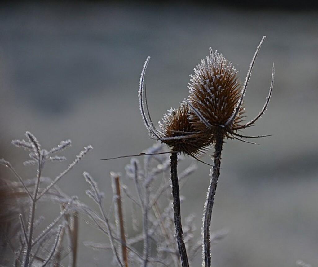 Givre-neige-6-6817_modifie-1.jpg