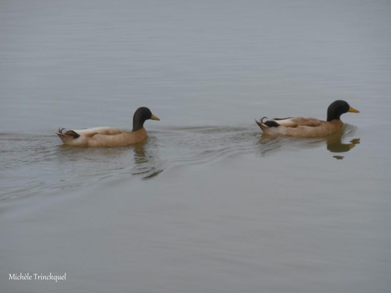 Une balade au Lac de Tastoa, le 15 février (suite n° 2 et fin)...