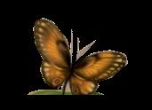 *** Les 113 Verdronken Vlinder ***