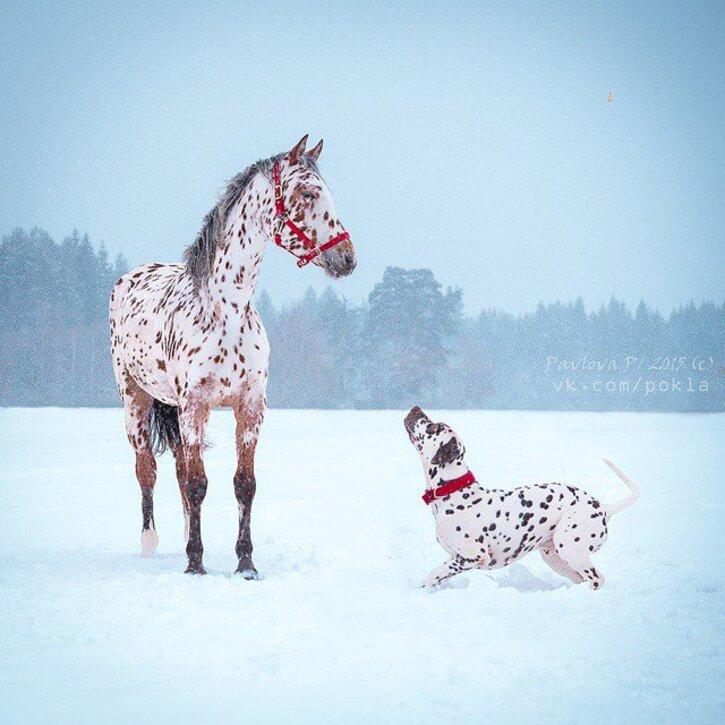 Articles/Photos sur les animaux - 3 - 15 images d'animaux jumeaux mais pas de la même espèce
