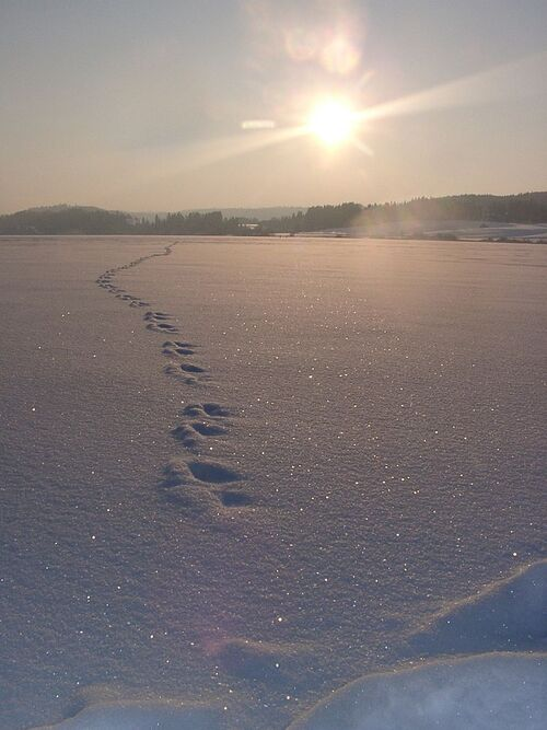 Le lac de St Point