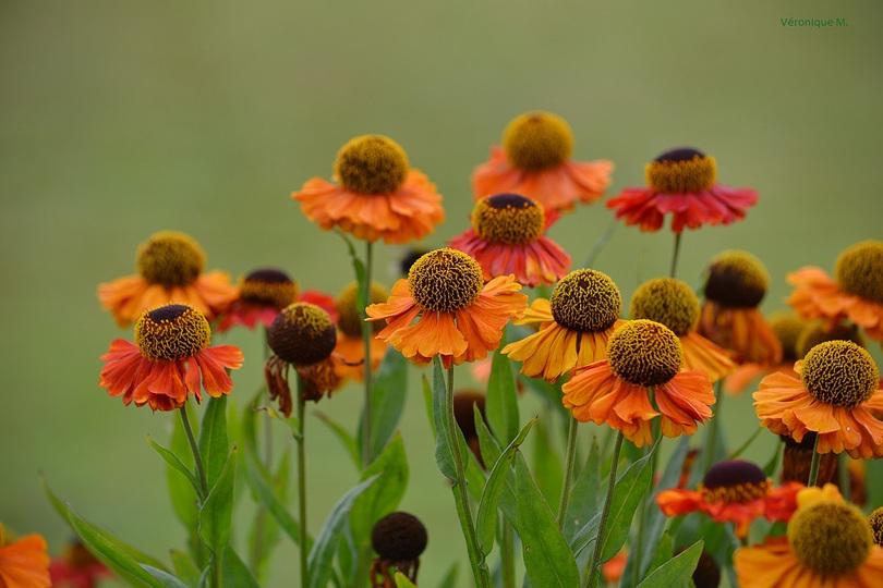 Les photos du Week-End : Des fleurs et des citations