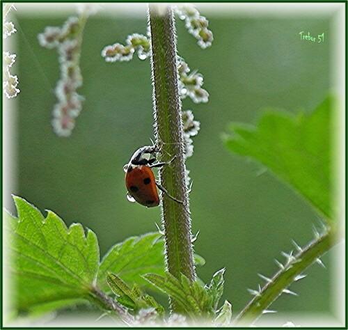 Insolite ou insectes rares.....