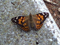 Nos papillons se sont envolés!