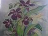 Z-2011-Orchidées Chantilly 016 (3).JPG