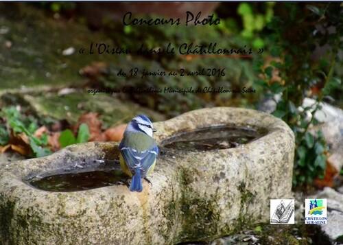 Un concours photo sur les oiseaux du Châtillonnais est proposé par la bibliothèque Municipale de Châtillon sur Seine...