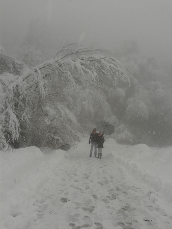 neige & brouillard