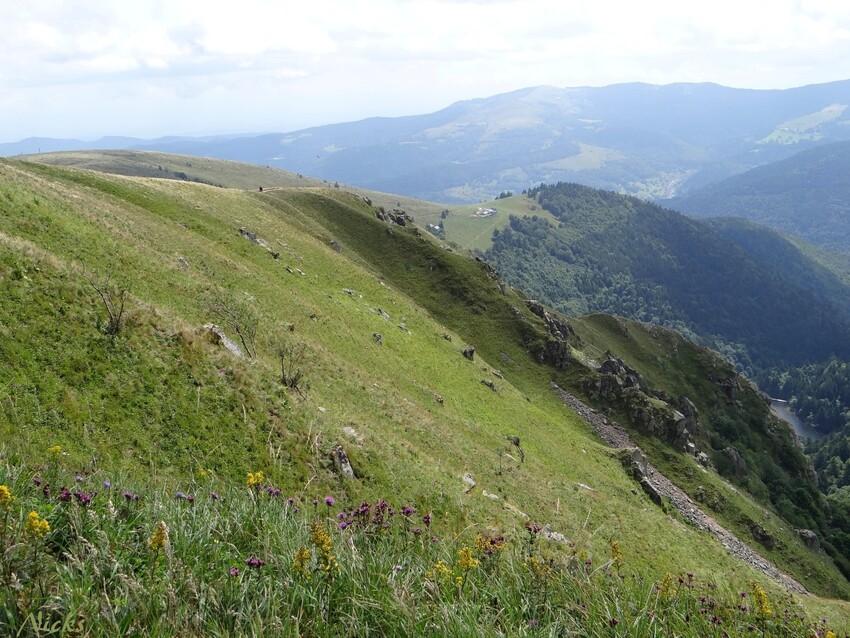 dans les Vosges,