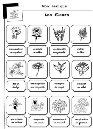 Lexique des fleurs, imagier, GS, CP Ce1