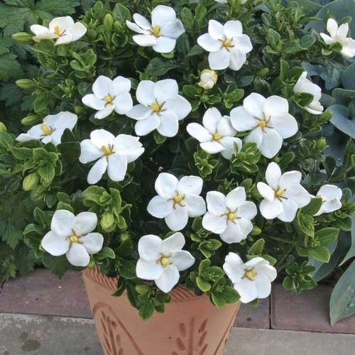 Plante a fleur blanche d interieur fleurs blanches vivaces printemps ...
