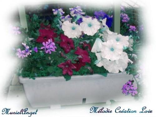 fleur-blanche-MA-1.JPG