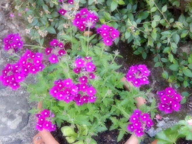 l'environnement,bienvenue dans mon jardin