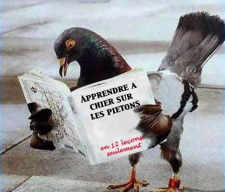 Top Photos/Images] Drôle D'animaux ♥ - LesPipellettes TL59